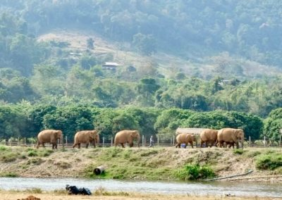 Save the Elephants - elephant herd