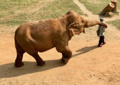 Save the Elephants - elephant mahout